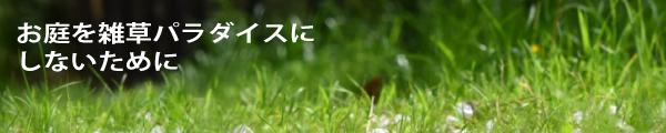 160323_CFCK_草抜き_トップ1